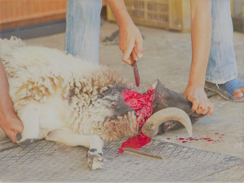 Schächtverbot jetzt! – Es geht um viel mehr als nur den Tierschutz